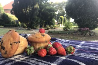 Picknickdecke mit Erdbeeren und Kuchen. Im Hintergrund Büsche, Weg und Haus. - Copyright: Bernd K. Jacob