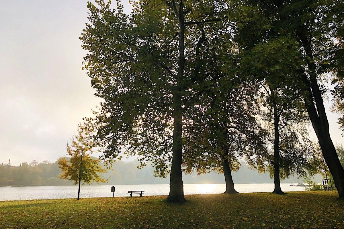 Ein kleiner und drei große Bäume im Herbst am Fluss.