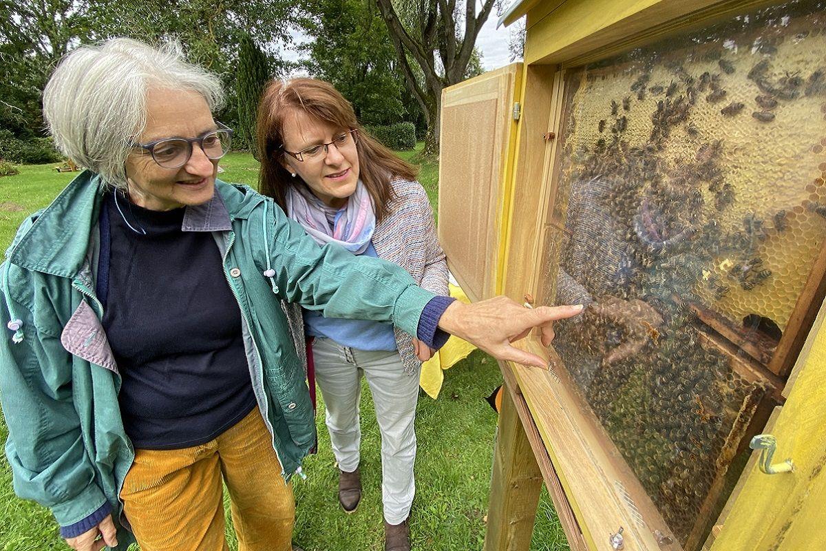 Zwei Frauen schauen in einen Schaukasten, in dem ein Bienenvolk lebt.